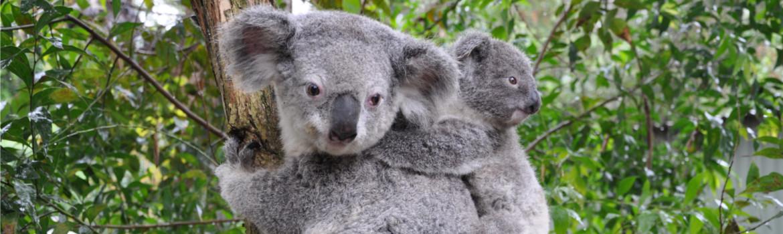 coala-slider